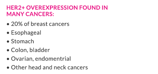 HER2+ overexpression found in many cancers